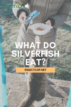 What do silverfish eat? How can knowing their diet help you get rid of these little insects? Find out here! #InsectCop #silverfish #silverfishfacts #insectfacts #housholdtips #householdhacks #help #tutorial #pestcontrol #pestcontroltips #pests #insects #pestfacts #pestcontrolfacts #nature #facts #naturefacts #entomologist Silverfish Control, Enchanted Garden, Pest Control, Insects, How To Find Out, Facts, Nature, Animales, Naturaleza