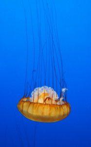 Monterey Bay Aquarium http://meriharakka.net/2015/02/25/monterey-bay-aquarium/