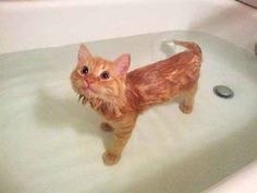 """Why are you looking at me like that? I'm just a cat trying to enjoy a nice little swim."""