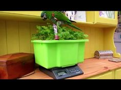 How to weigh your parrot easily and stress free - YouTube