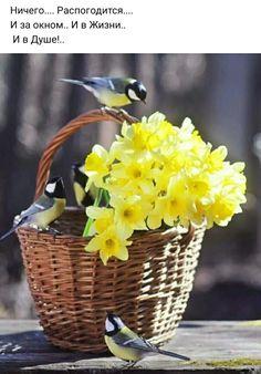 Желтый Коттедж, Нарциссы, Красивые Птицы, Весенние Цветы, Художественная Фотография, Забавные Зверюшки, Вазы, Природа, Рамки