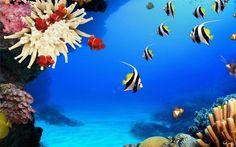 arrecife   Peces de los arrecifes de coral Fondos de pantalla : Wallpapers y ...