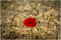 Summer is here by Pedro Galamarra on 500px