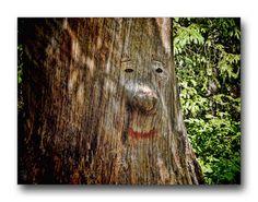 Oldrobel's Fotoreise: The Tree of Wisdom?