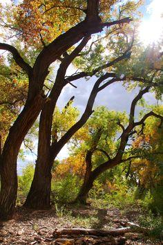 Sun Salutation - Paseo del Bosque Trail, Rio Grande Valley State Park, near Corrales, New Mexico