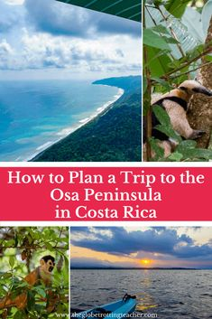 How to Plan a Trip to the Osa Peninsula in Costa Rica- Discover Costa Rica's crown jewel on its southwestern peninsula. Corcovado National Park, incredible wildlife, and unbelievable jungle and water adventures await! Use this guide to plan your Osa trip! South America Destinations, South America Travel, Travel Destinations, North America, Puntarenas, Montezuma, Monteverde, Honduras, Corcovado National Park