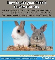 This works very well my rabbits are trained they come to me actually even with out calling their names.