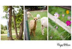 { Rosie & Russo } Venue :: The Lyons Farmette | Photography :: Angie Wilson |