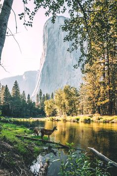 Yosemite Valley | zeppaio