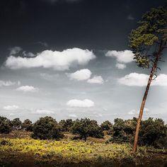 Tree in BW sky #super_holland #ig_nederland #dutch_connextion #superhubs #wonderful_holland #igholland #nature #clouds #tree #naturelover #nature_shooters #mothernature #bomen #natuurgebied