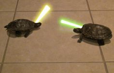 New trending GIF on Giphy. star wars turtle lightsabers. Follow Me CooliPhone6Case on Twitter Facebook Google Instagram LinkedIn Blogger Tumblr Youtube