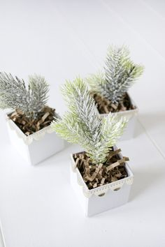 DIY Mini Christmas Trees in a Box by Brepurposed for The Holiday Collective