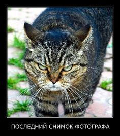 Ru_Cats