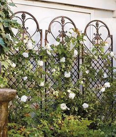 This Scroll Wall Trellis functions beautifully against a wall positioned as a f Wall Trellis, Rose Trellis, Metal Trellis Panels, Metal Garden Trellis, Pea Trellis, Clematis Trellis, Grow Organic, Organic Plants, Organic Gardening