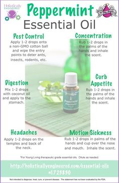 Peppermint Essential Oil Uses. Also, you can spray diluted peppermint oil into stinky shoes and boots to eliminate odors, and add a teaspoon of the EO to floor-washing water to add fresh scent, as well as antibacterial properties. Yl Oils, Aromatherapy Oils, Doterra Essential Oils, Essential Oil Diffuser, Essential Oil Blends, Peppermint Essential Oil Uses, Uses For Peppermint Oil, Peppermint Oil Spiders, Peppermint Essential Oil Benefits