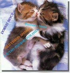 Humor, Cats, Animals, Gatos, Animales, Animaux, Humour, Funny Photos, Animal