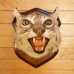 Gorgeous mounted Bobcat head! Shop Alley Oop Vintage! www.facebook.com/AlleyOopVintage