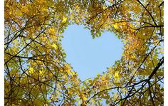 live from the heart every day.  nature reminds us.  heart nature photograph | photographic showcase of unexpected hearts…