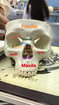 Medicine Notes, Medicine Student, Human Body Anatomy, Human Anatomy And Physiology, Anatomy Bones, Study Biology, Dental Hygiene School, Medical Anatomy, Medical Laboratory