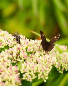 Hyönteishotelli   Meillä kotona Moth, Insects, Plants, Animals, Animales, Animaux, Animal, Plant, Animais