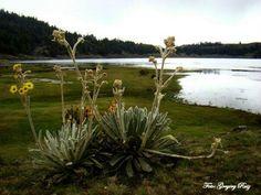 Greg Ruiz Fotografía @GREGORY_08   La laguna d Mucubají está situada entre 3625-3655msnm en el Parque Sierra Nevada, en el Estado Mérida