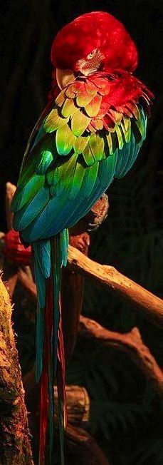 Macaw parrot image via Guns and Roses on Facebook at www.facebook.com/GunsAndRosesAll