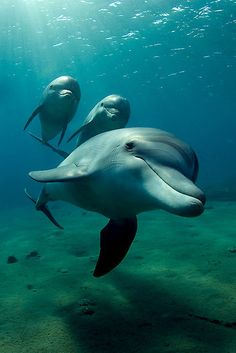 Dolphins - National Geographic Photo Contest www.ilove-Africa.com
