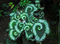 unusual leaves