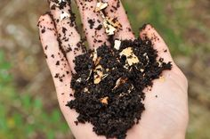 6 Reasons That Coffee Grounds Are A Miracle For Your Garden Such a nice read. Quite usefull