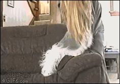 Static-dog: click to watch gif