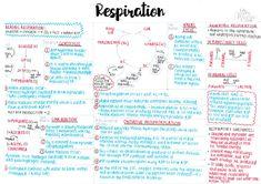 biology ideas Respiration - A level Biology summary Biology Aqa, Study Biology, Biology Lessons, Teaching Biology, Igcse Biology, Biology Projects, Cell Biology, Science Biology, Teaching Art