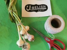 Braiding garlic at U-Relish Farm