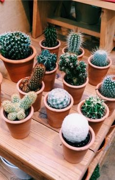 heart and cacti image Plants Cactus Cactus plants House plants Baby cactus Planting succulents green heart and cacti image Plants Cactus Cactus plants House plants Baby. Cacti And Succulents, Planting Succulents, Planting Flowers, Cactus Decor, Plant Decor, Baby Cactus, Cactus Cactus, Small Cactus, Cactus Backgrounds