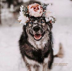 Joey husky wearing a crown, Wedding flower crown, flower girl, faux flowers, flo… - Dog Photography Pretty Animals, Cute Little Animals, Cute Funny Animals, Beautiful Dogs, Animals Beautiful, Dog Pictures, Animal Pictures, Cute Dogs And Puppies, Doggies