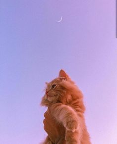 Cute Baby Cats, Cute Cats And Dogs, Cute Little Animals, Cute Funny Animals, Kittens Cutest, Cats And Kittens, Cute Cat Wallpaper, Scenery Wallpaper, Animal Wallpaper