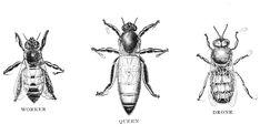 The Graffical Muse: bees