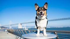 Sacramento Pet Photographer – Purple Collar Pet Photography » Blog