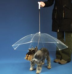 this is ridiculously funny but so smart! ...this would make rainy days so much more enjoyable with Paisley