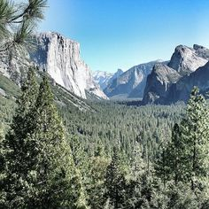 USA   Mountains and pine trees in Yosemite National Park USA