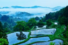 "This shot is rice terraces in Tokamachi-city Niigata / Photo ""After the rain"" by MIYAMOTO Y"