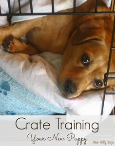 Crate training your new puppy! How to use the crate; Sample puppy schedule for crate training; Dog Training Equipment, Puppy Training Tips, Crate Training, Training Your Dog, Agility Training, Dog Agility, Potty Training, Puppy Schedule, Puppy House