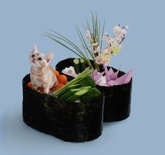 Bizarre But Adorable Pictures Of Cats Dressed To Look Like Sushi - DesignTAXI.com
