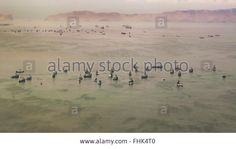 Download this stock image: Aerial view shot from window plane of a group of commercial ships in the waters of the pacific ocean near the coast of Lima in P - FHK4T0 from Alamy's library of millions of high resolution stock photos, illustrations and vectors.