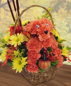 Our newest floral puppy, Pumpkin from Beneva Flowers in Sarasota, Florida!