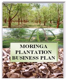 Learn Why You Should Shop At Local Farmers Market Dallas Locations Benefits Of Moringa Seeds, Moringa Recipes, Miracle Tree, Moringa Leaves, Farm Business, Moringa Oil, Healing Herbs, Business Planning, A Team