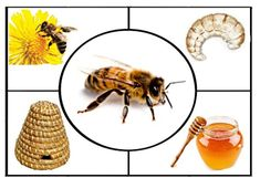Farm Activities, Sequencing Activities, Animal Activities, Farm Animals Preschool, Fun Worksheets For Kids, Hobbies For Adults, Plant Pests, Farm Theme, Forest Animals