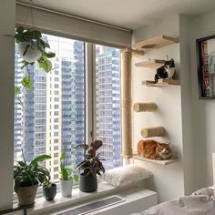 The ultimate cat luxury. Look at these cuties enjoying their custom setups from Swipe to see more! Cat Wall Furniture, Apartment Furniture, Apartment Living, Cat Jungle Gym, Cat Gym, Cage Chat, Diy Cat Shelves, Cat House Diy, Cat Bedroom
