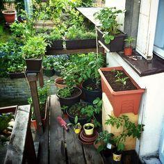 7 tipů jak rozjet jedlý balkon — optimisticky, lenivě a zeleně