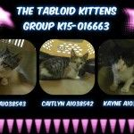 Super Urgents | NYC AC&C Urgent Cats