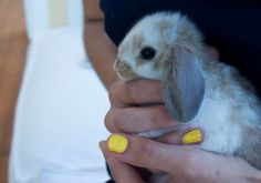 Ikea hack bunny hutch
